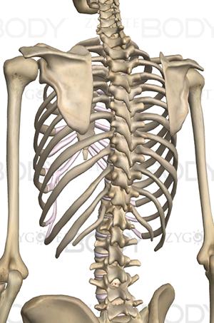 背骨の写真