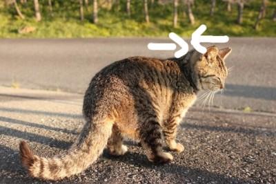 猫は後頭部が詰まる